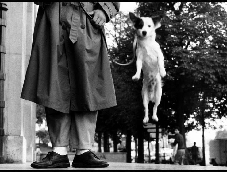 Elliott Erwitt, Paris (Dog Jump)