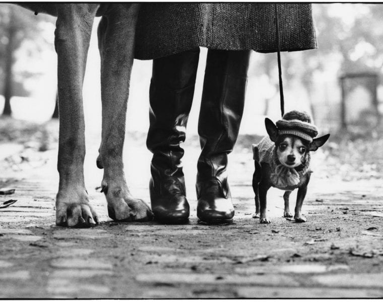 Elliott Erwitt, New York City, 1974, Dog Legs