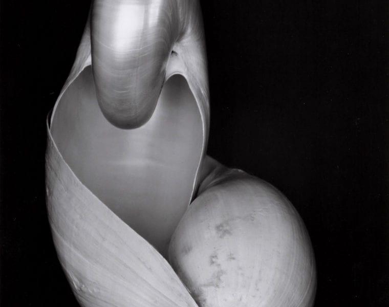 Edward Weston, Two Shells