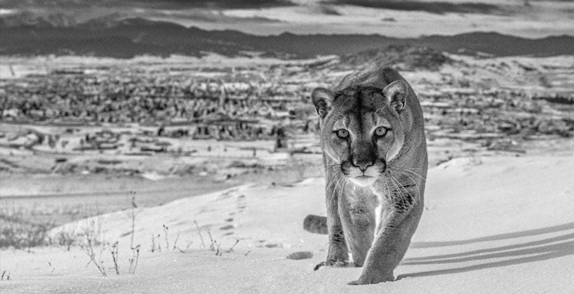 David Yarrow, Frontier Town, Butte, Montana, USA