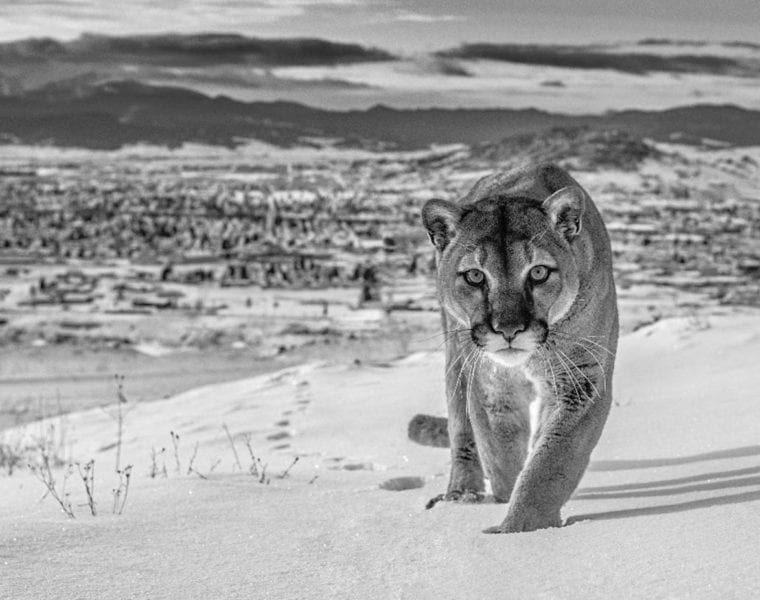 David Yarrow, Frontier Town, Butte, Montana, USA