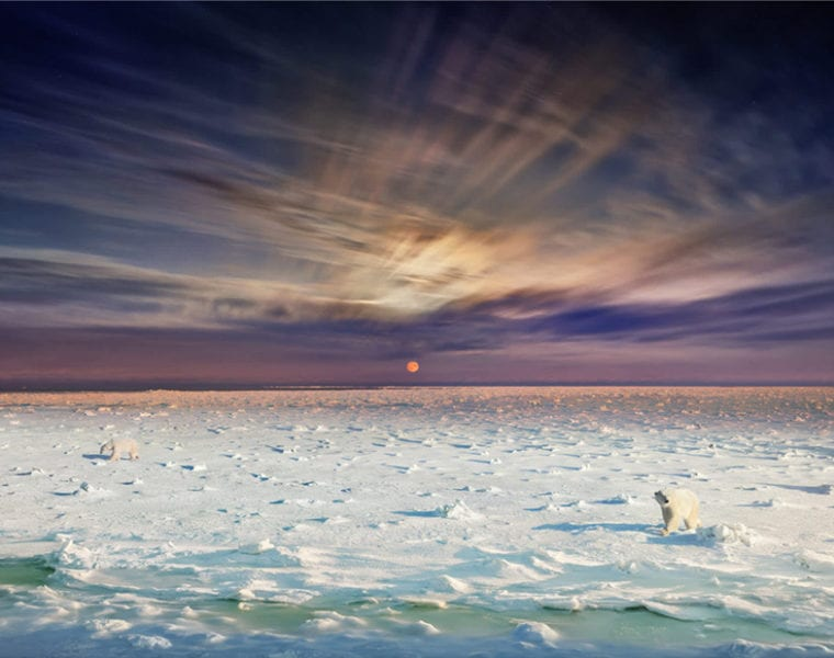 Stephen Wilkes, Polar Bears, Churchill, Manitoba, Day to Night