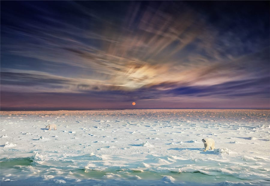 Stephen Wilkes, Polar Bears, Churchill, Manitoba, Day to Night
