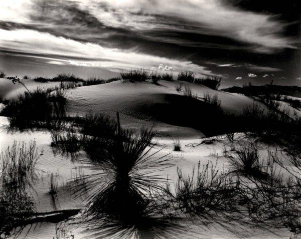 Brett Weston, Dune and Yucca