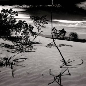 Brett Weston, Dunes and Plants, Texas Desert