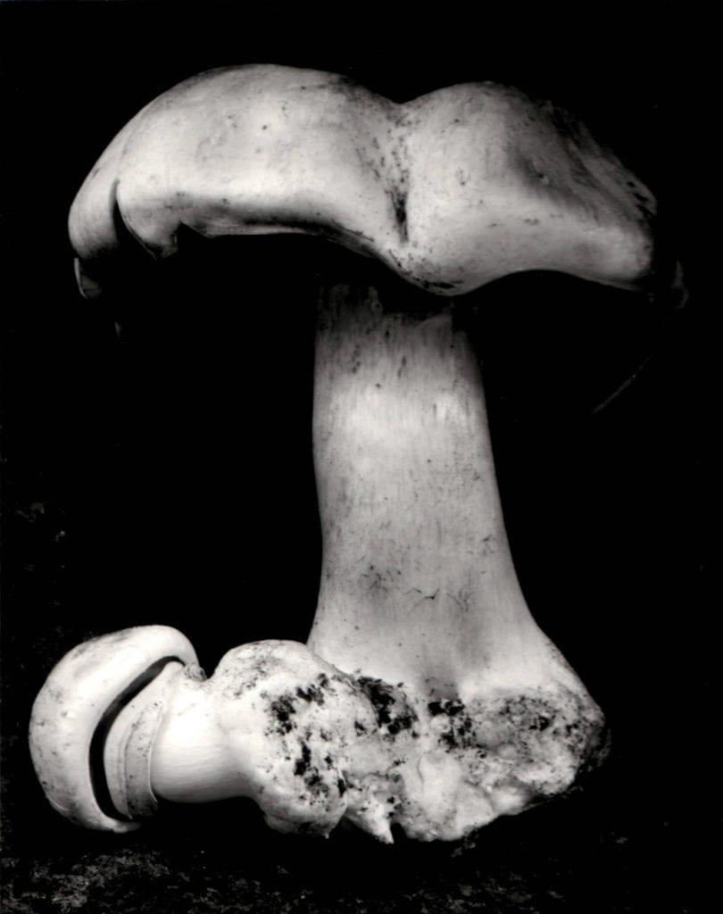 Edward Weston, Toadstool