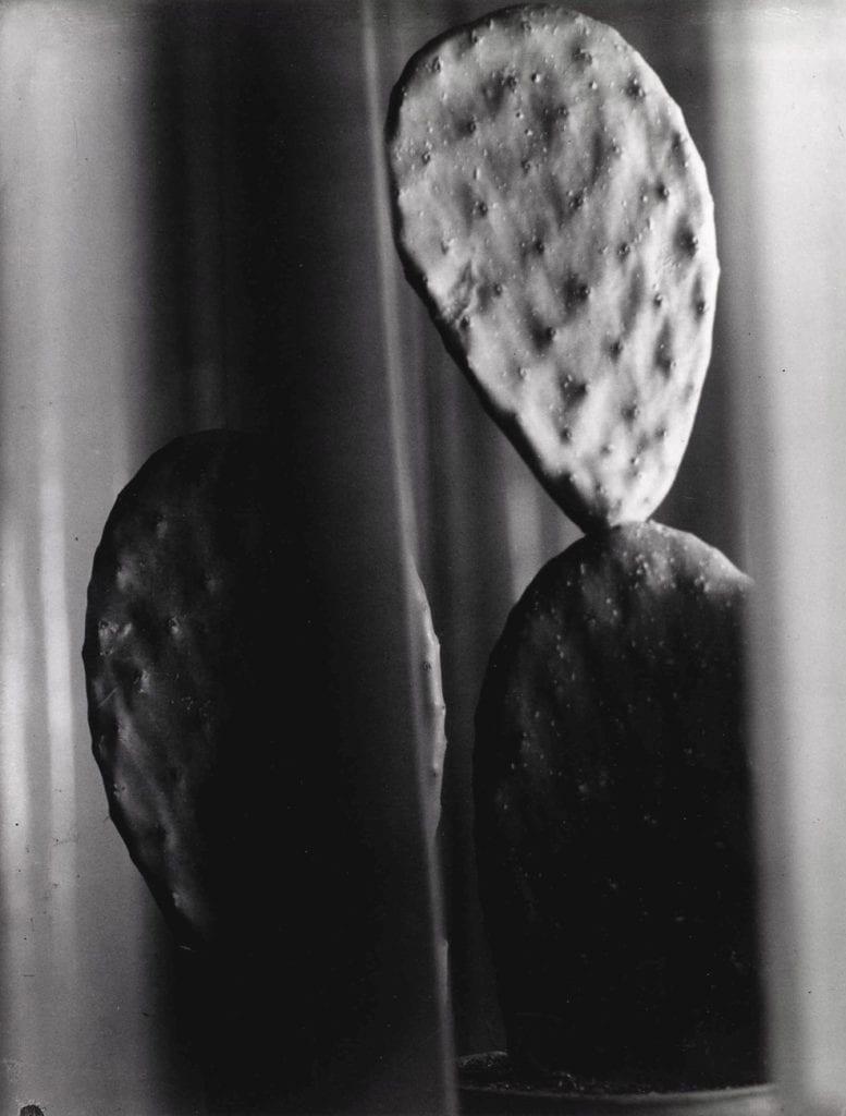 Florence, Henri Cactus
