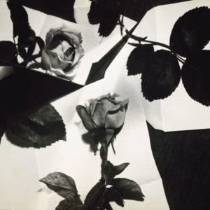 Florence Henri, Nature Morte (Roses)