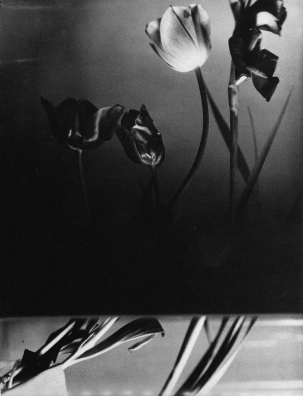 Florence Henri, Nature Morte (Tulips)