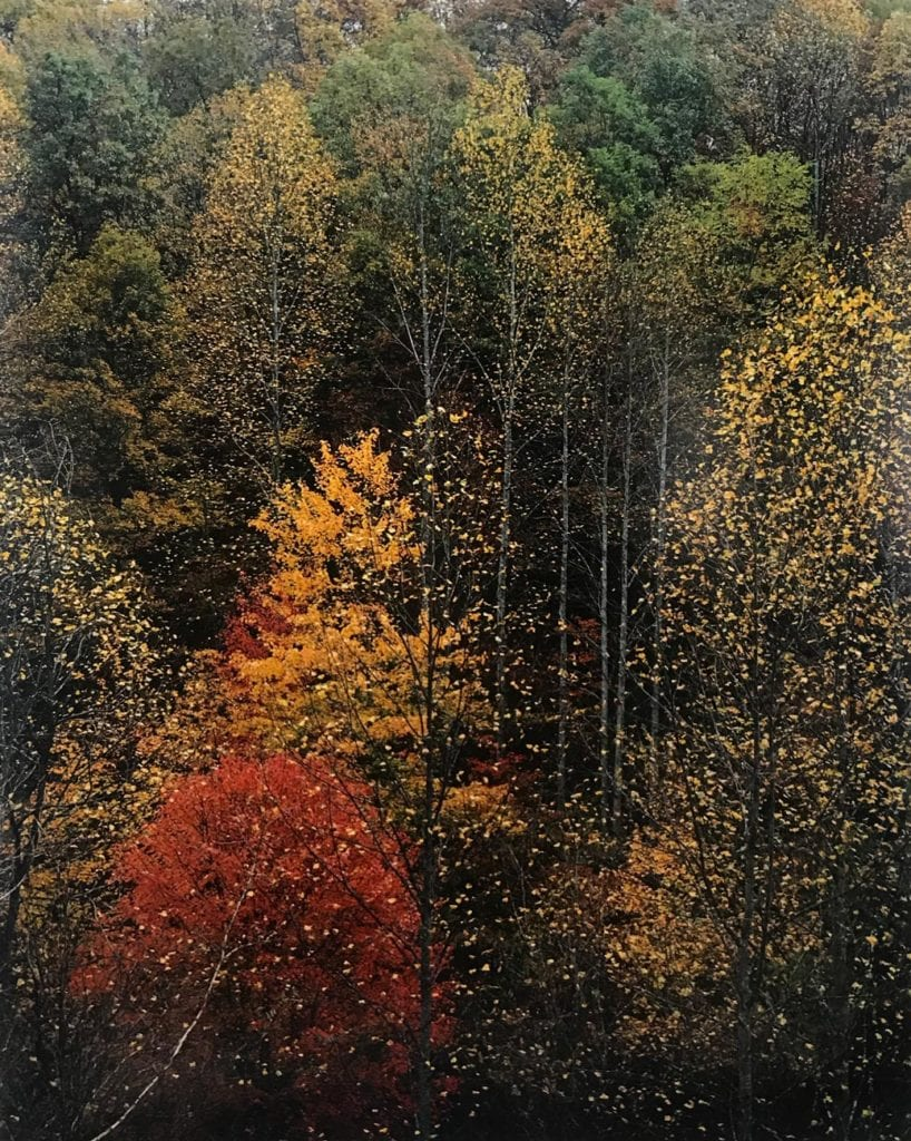 "Eliot Porter, Colorful Trees ""Newfound Gap Road, Great Smoky Mountains, Tennessee"
