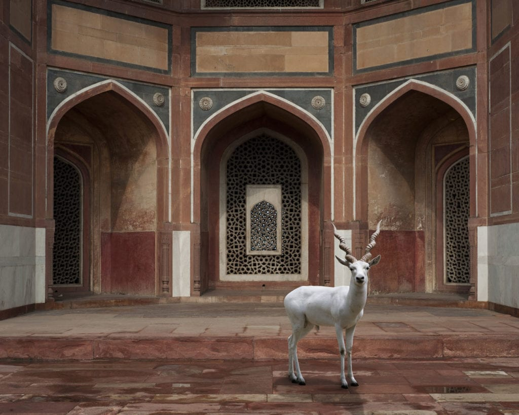 Karen Knorr, The Witness, Humayun's Tomb, New Delhi