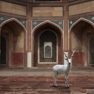 Karen Knorr, The Witness, Humayun's Tomb, New Delhi