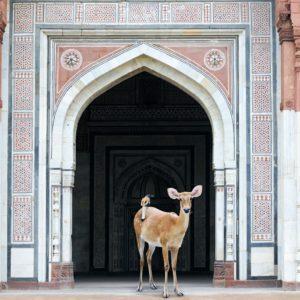 Karen Knorr, The Messenger, Purana Qila, New Delhi