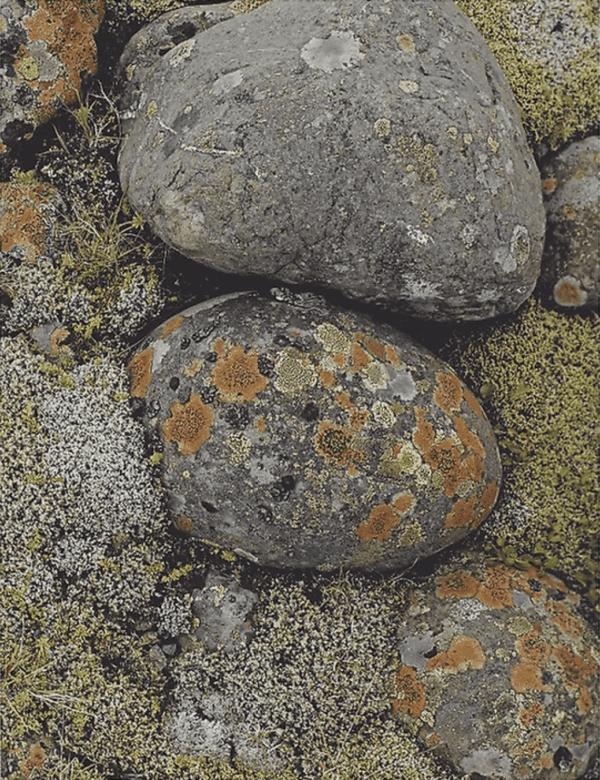 Eliot Porter, Lichens on River Stones - South Coast