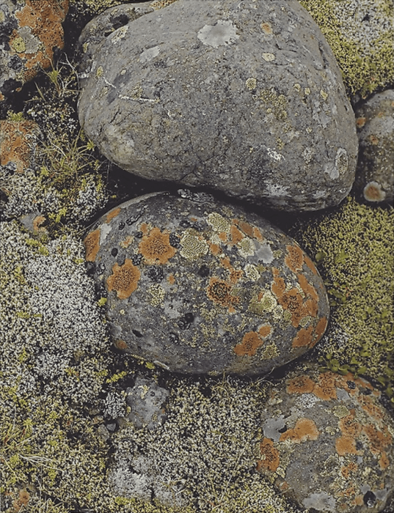 Eliot Porter, Lichens on River Stones - South Coast