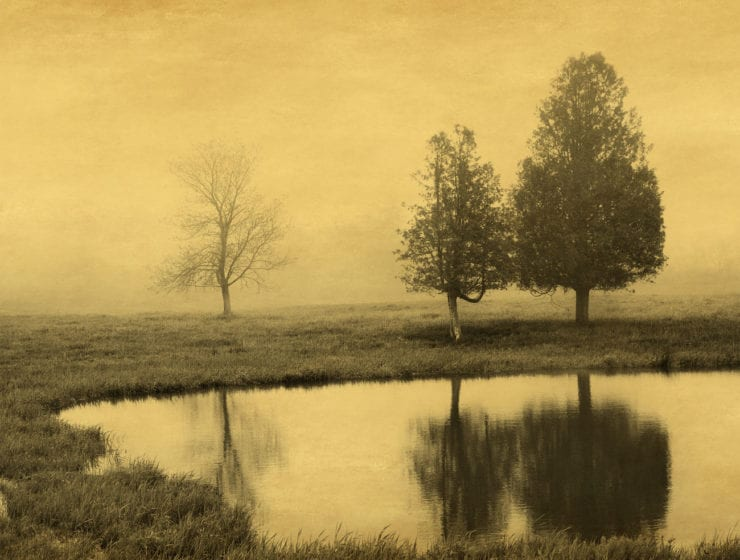 Joyce Tenneson, Trees and Reflection