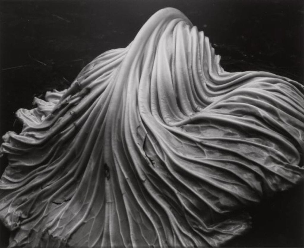 Edward Weston, Cabbage Leaf