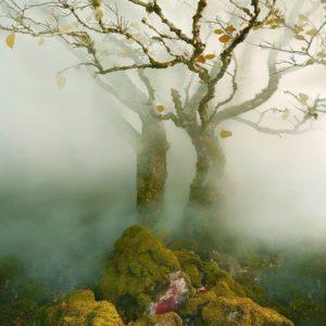 Albert Watson, Tree in Mist, Fairy Glen, Isle of Skye, Scotland