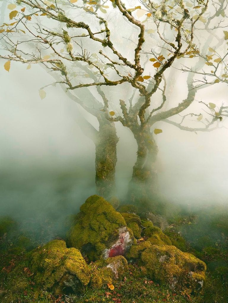 Albert Watson, Tree in Mist, Fairy Glen, Isle of Skye, Scotland