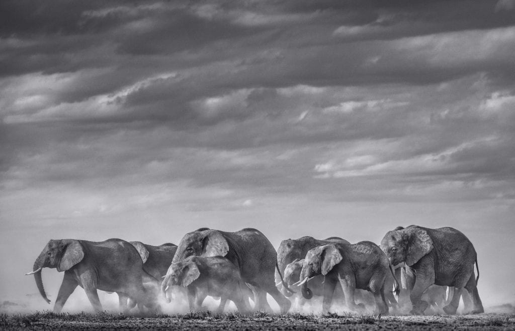 David Yarrow, Desert Army