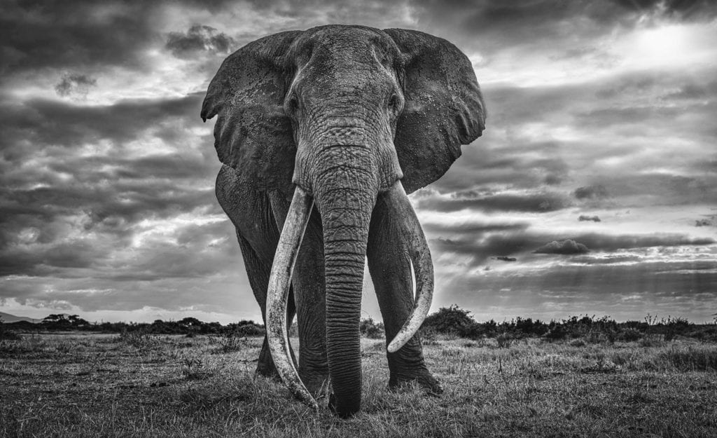 David Yarrow, Giant