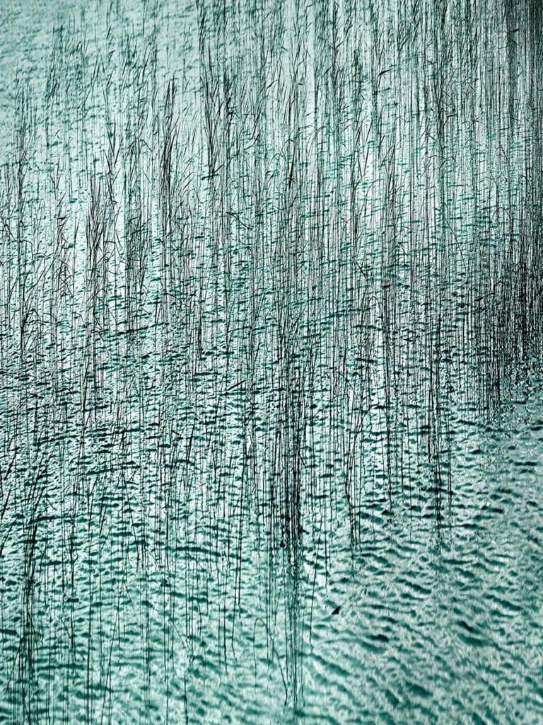 Skye Reeds in Water, Scotland
