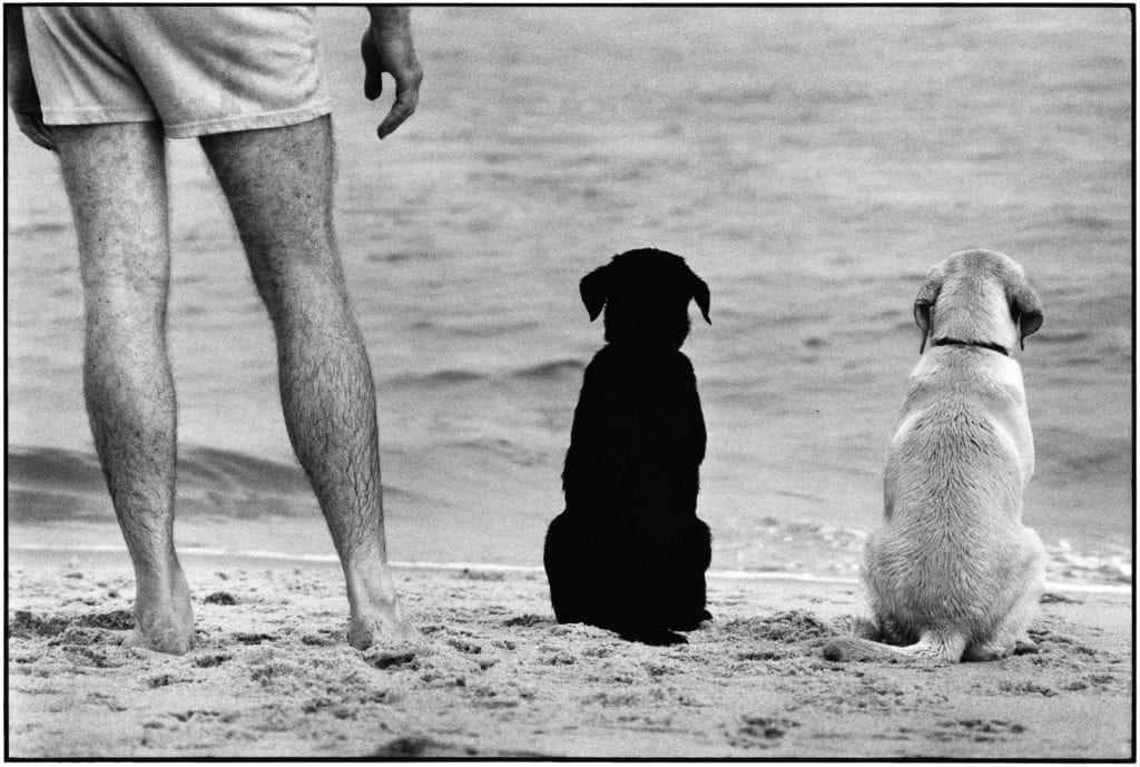 Elliott Erwitt, Amagansett, New York, 1990