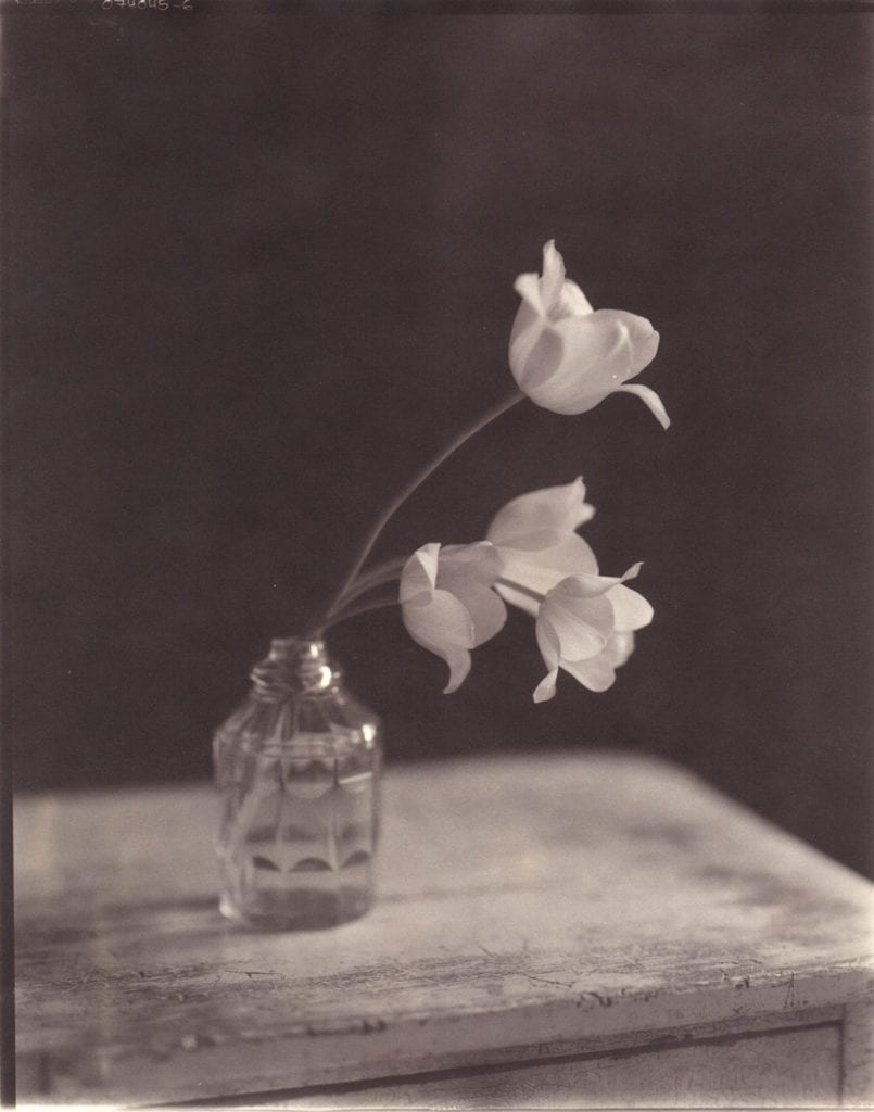 John Dugdale, Georgian Tulips