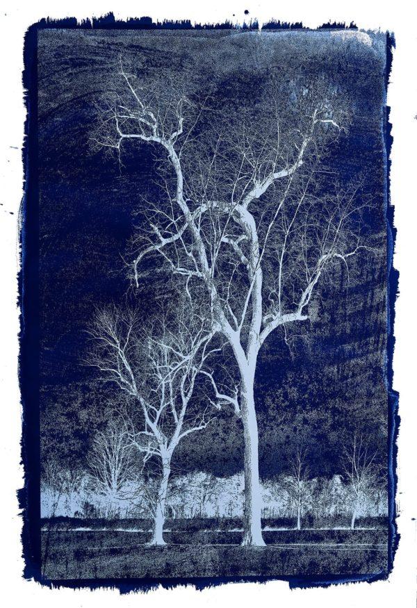 Michael Eastman, Cyanotype #24