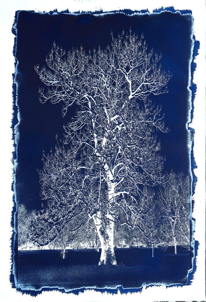 Michael Eastman, Cyanotype #26