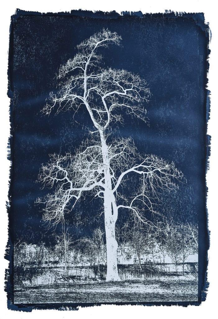 Michael Eastman, Cyanotype #31