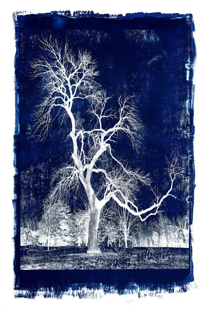 Michael Eastman, Cyanotype #28