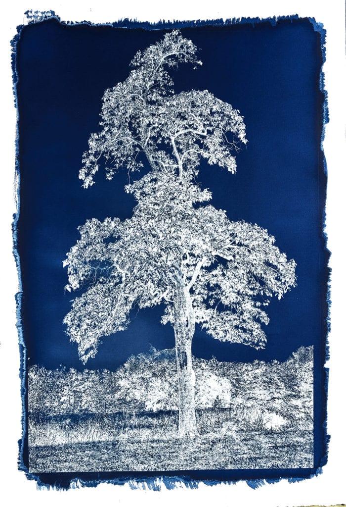 Michael Eastman, Cyanotype #29