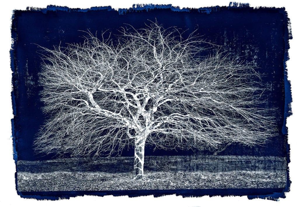 Michael Eastman, Cyanotype #37