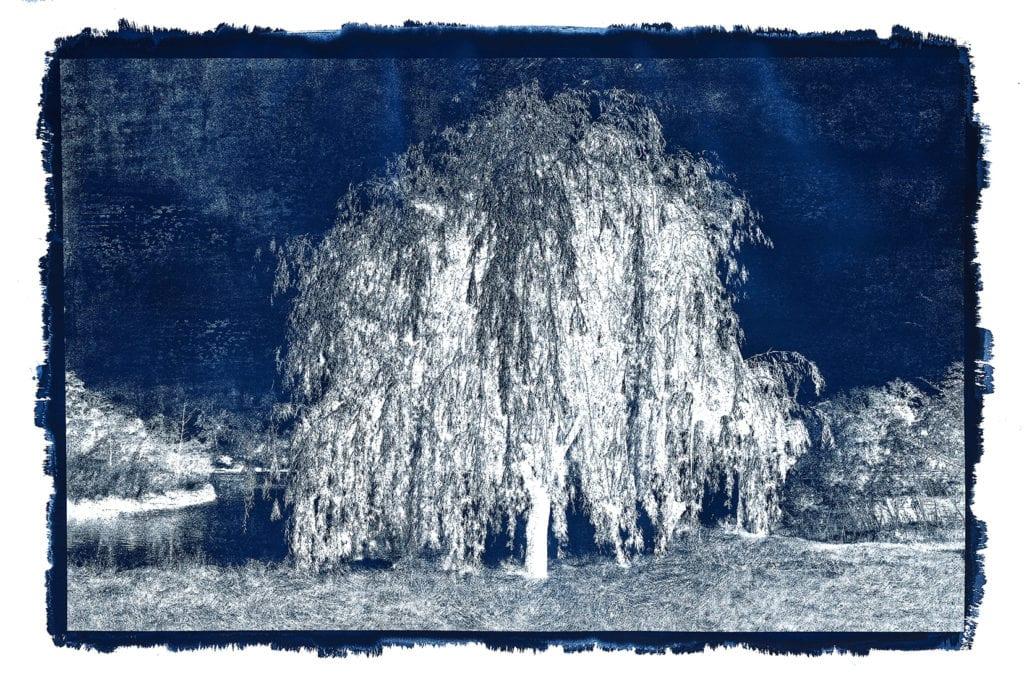 Michael Eastman, Cyanotype #20