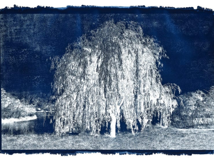 Michael Eastman, Cyanotype #20