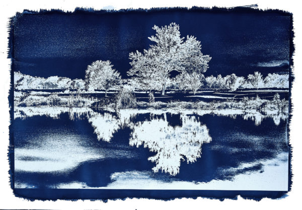 Michael Eastman, Cyanotype #42