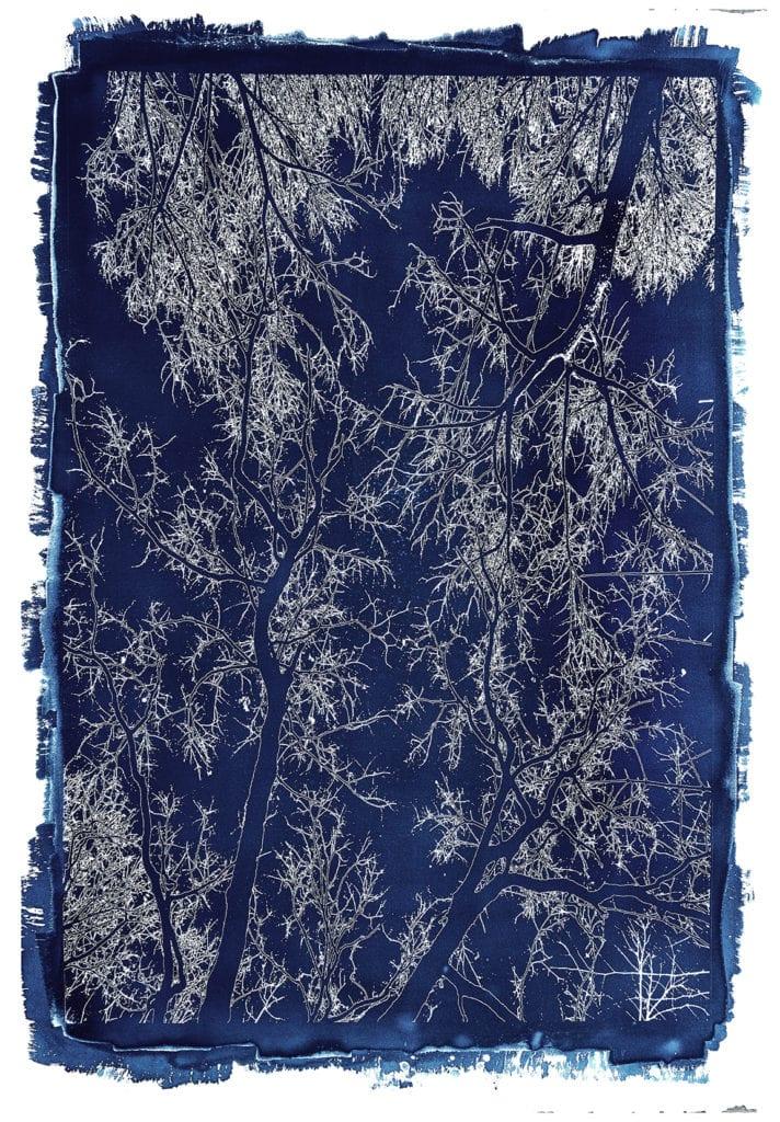 Michael Eastman, Cyanotype #43