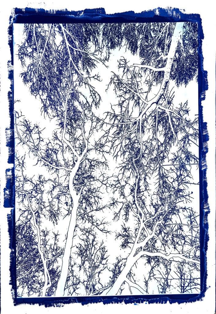 Michael Eastman, Cyanotype #44