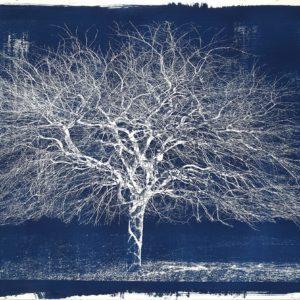 Michael Eastman, Cyanotype #16