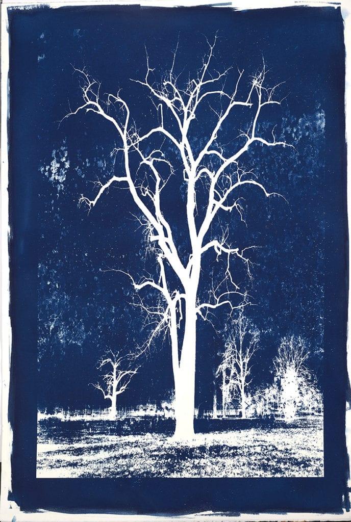 Michael Eastman, Cyanotype #11