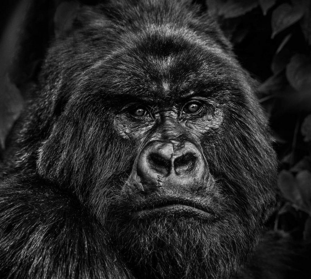 David Yarrow, Kong