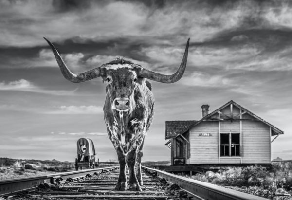 David Yarrow, The End of The Line