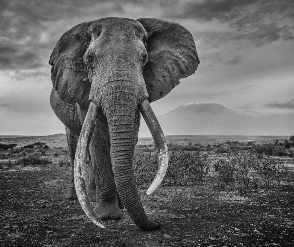David Yarrow, Craig, Amboseli, Kenya, 2021