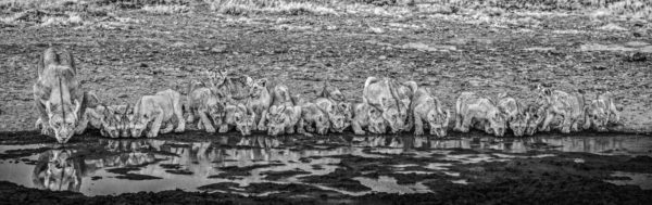 David Yarrow, One For The Road