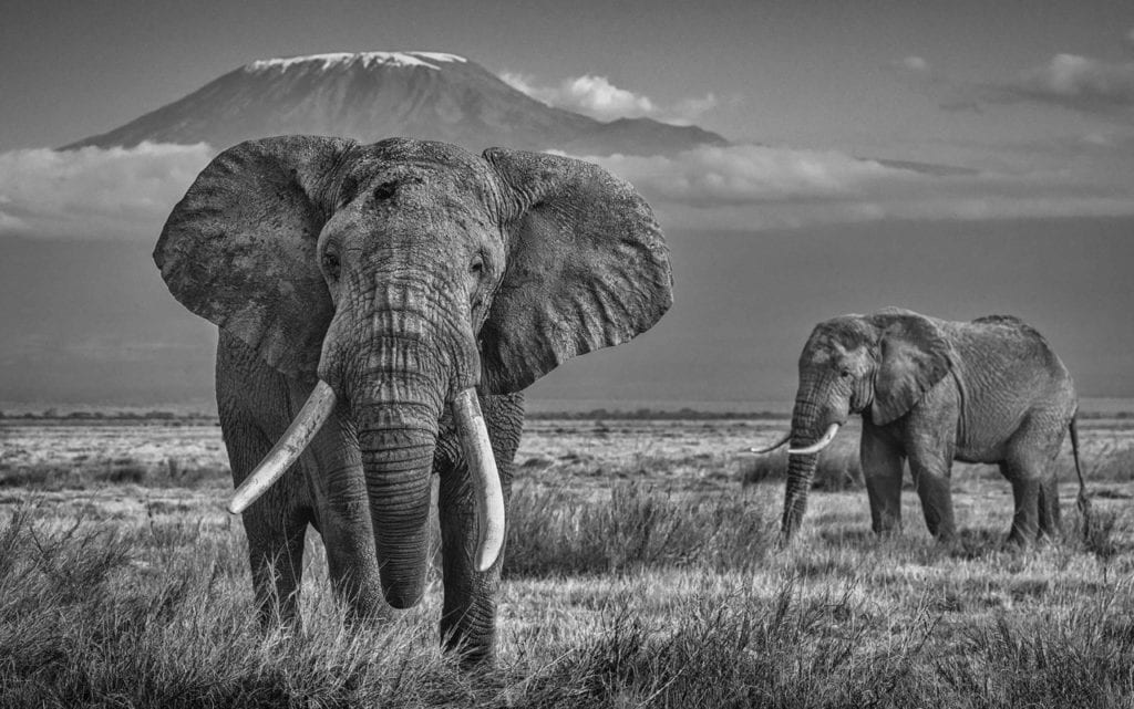 David Yarrow, The Witness
