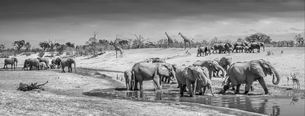 David Yarrow, Before Man, Savute, Botswana