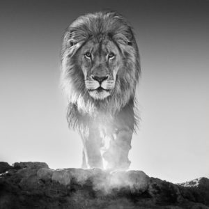 David Yarrow, The Old Testament, Dinokeng, South Africa