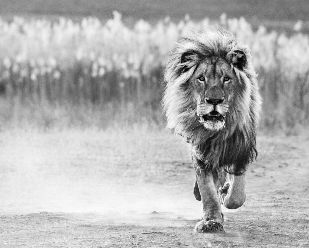 David Yarrow, One Foot On The Ground