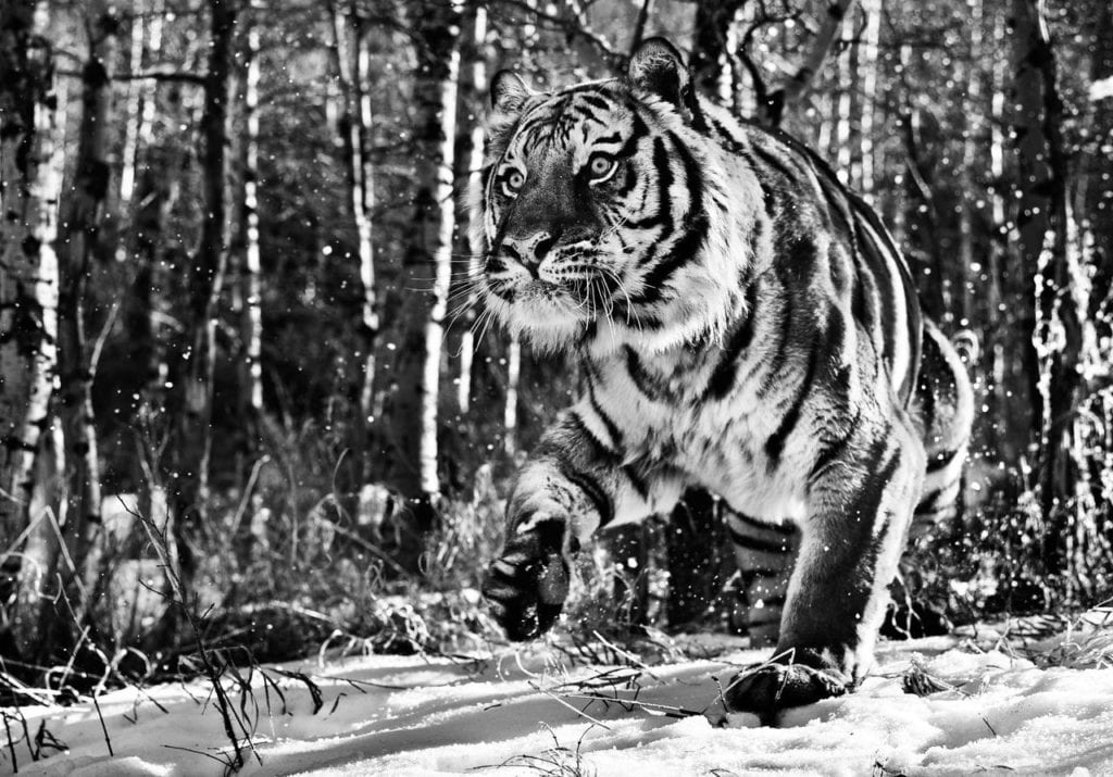 David Yarrow, Cold Mountain